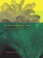 Plants in Mesozoic Time